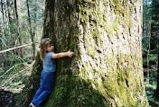 tree hugging image